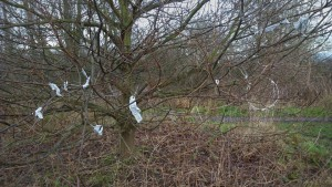 Childwall Woods_12.26pm_16012016_'But like most products that have risks associated with it, it's not the product, it's the use'